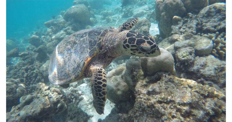 Botschaft der Meeresschildkröte »