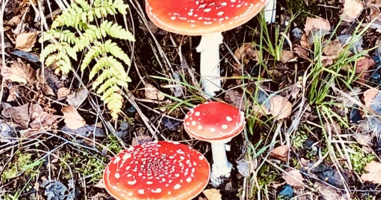 Das Glück der Pilze